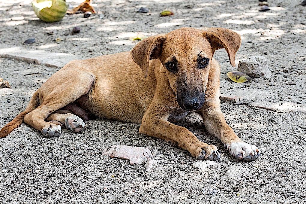 rusia sacrifica perros por mundial de futbol 2018