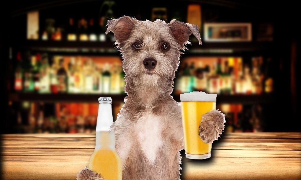 cerveza artesanal para perro