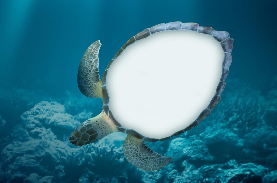 Tortugas en peligros de extinción desaparecen de zoológico de Japón