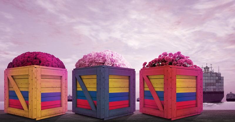 Colombia es el segundo exportador de flores a nivel mundial