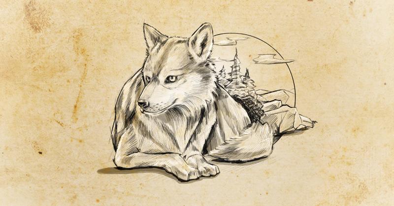 actualmente el lobo mexicano se encuentra en peligro de extinción