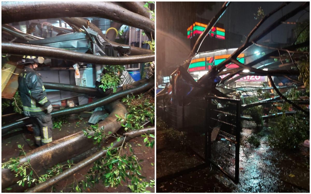 Tormenta mata a hombre en CDMX; le cae árbol de 25 metros en la Del Valle