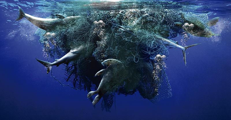WWF lanzó la petición de un Nuevo Tratado para Combatir la Contaminación Marina por Plásticos