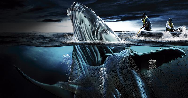 Las redes fantasma se han convertido en una de las herramientas que más animales marinos han matado