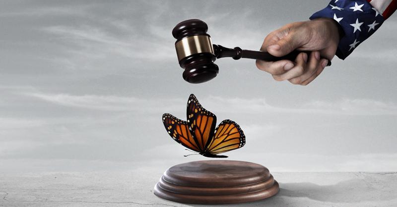 DACA enfrenta un nuevo desafío. Una Corte federal en Houston, Texas, analizará una solicitud para invalidar el programa