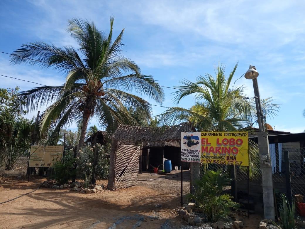 El campamento tortuguero Lobo Marino es uno de los pocos independientes que operan en Guerrero, la mayoría ha cerrado por falta de recursos.