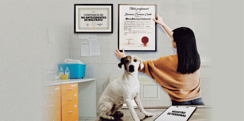 En este año los Centros de Control Canino y Felino operados por los municipios tendrán que profesionalizar a su personal para evitar el maltrato animal