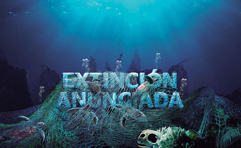 Cada año los ejemplares de tortuga caguama (caretta caretta) realizan uno de los viajes más largos del mundo