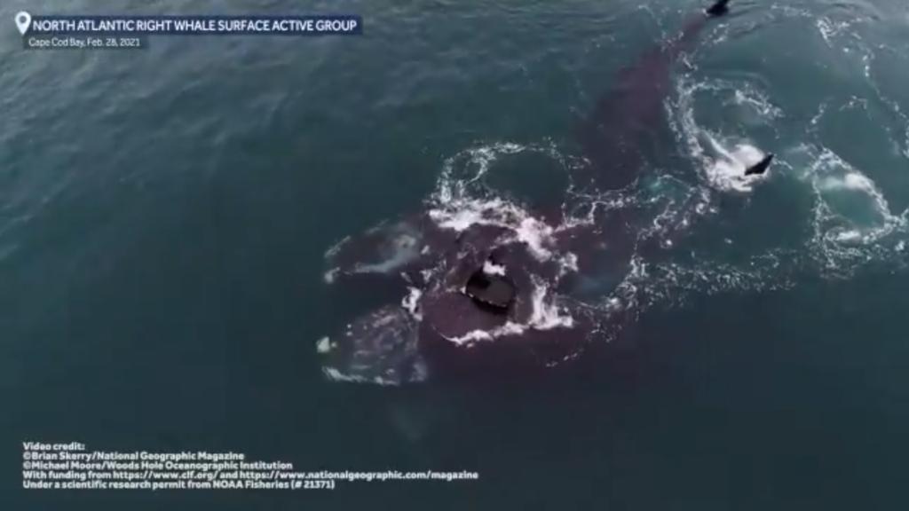 """Lo que sabemos del """"abrazo"""" entre ballenas en peligro de extensión que se volvió viral (VIDEO)"""