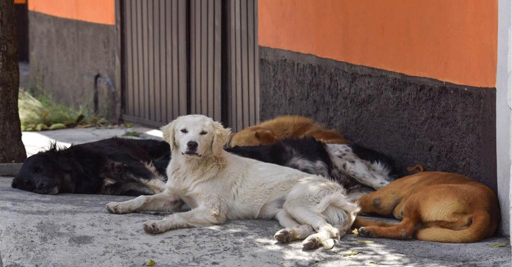 Narda y Claudia tienen 23 y 24 años, respectivamente. A su edad hacen una gran proeza: rescatan perros en condición de calle en Linares
