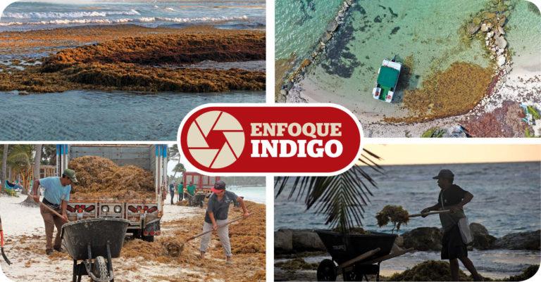 Quintana Roo enfrenta a un visitante que sigue llegando a las playas del Caribe mexicano: el sargazo