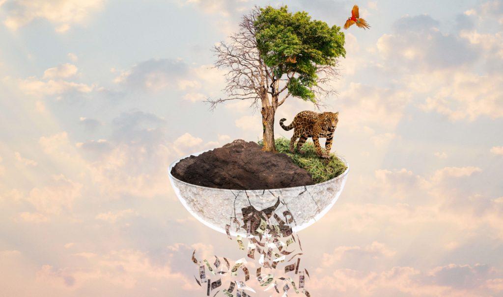 En 2018 y 2019, la Semarnat recibió más de 343 millones de pesos para el programa 'Conservación y Aprovechamiento Sustentable de la Vida Silvestre'