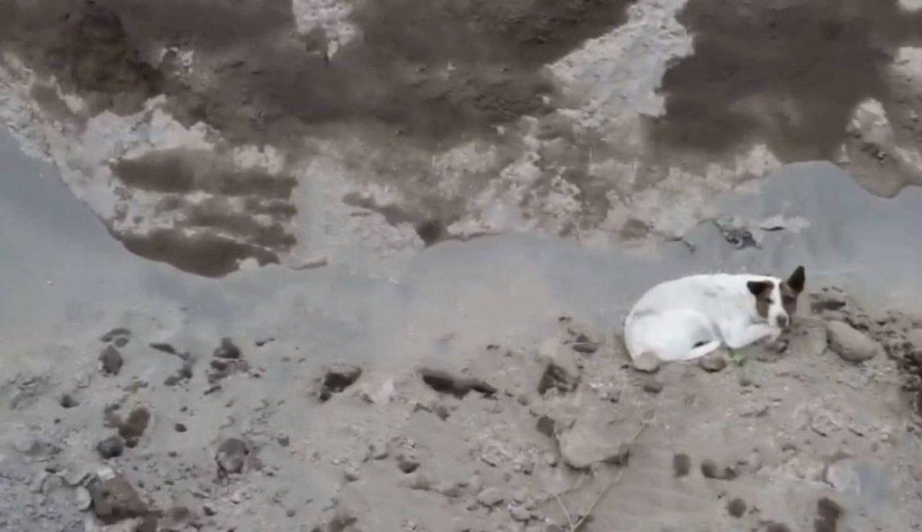 """Nuevo perro en socavón de Puebla no cayó; entró y salió por """"escaleras"""" naturales"""