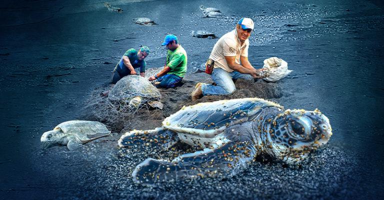 La Fundación Yepez A.C. se ha dedicado por más de 20 años al cuidado de las tortugas marinas