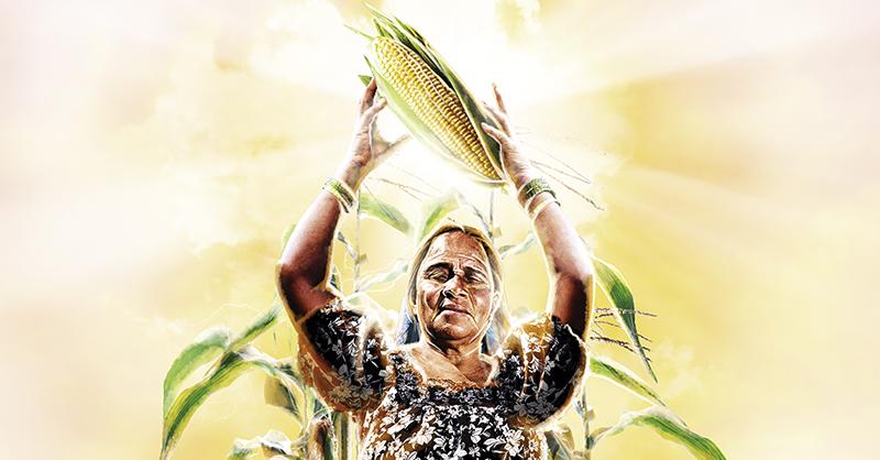 La evolución del maíz bien podría narrar la historia de México