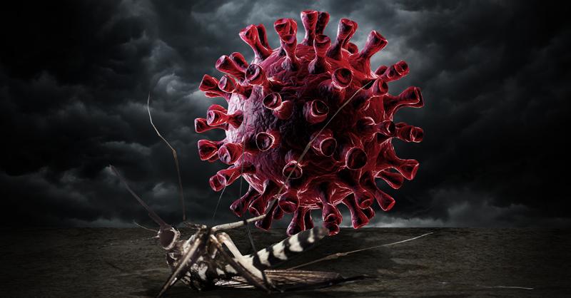 Las medidas adoptadas para prevenir el contagio del COVID-19 provocaron la disminución de otros padecimientos en el 2020 como el dengue