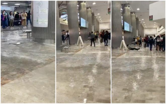 AICM se convierte en río: difunden inundaciones en aeropuerto tras lluvia intensa (VIDEO)