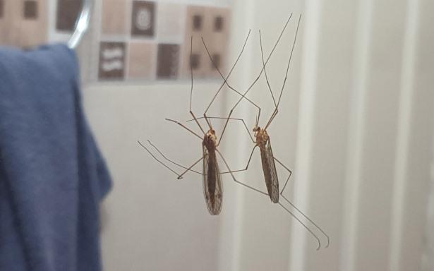 ¿Puedo enfermar de COVID y dengue al mismo tiempo? Sí y los síntomas son muy similares