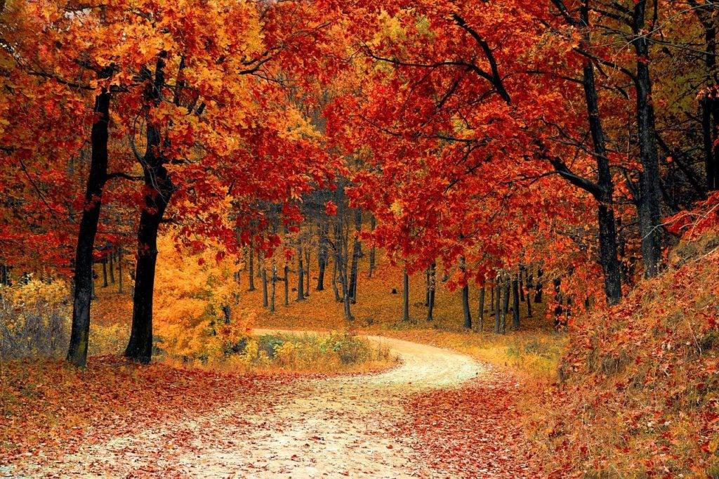 ¿Por qué las hojas se ponen rojas y caen de los árboles en otoño? Esta es la explicación científica